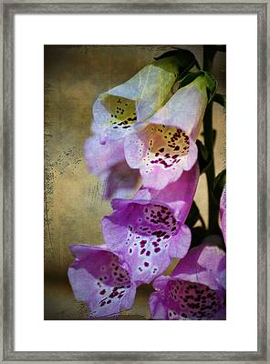 Dirty Belles Framed Print by Bill Cannon
