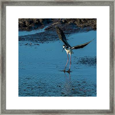 Dirty Feet Framed Print