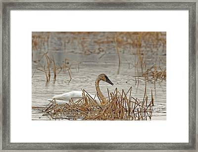 Dirty Tundra Framed Print by Natural Focal Point Photography