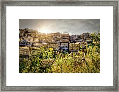 Discarded Apple Crates Framed Print