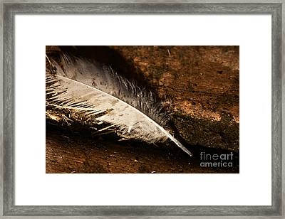 Discarded Feather Framed Print by Jorgo Photography - Wall Art Gallery