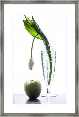 Discovery Framed Print by Maggie Terlecki