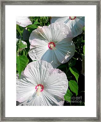 Dish Flower Framed Print