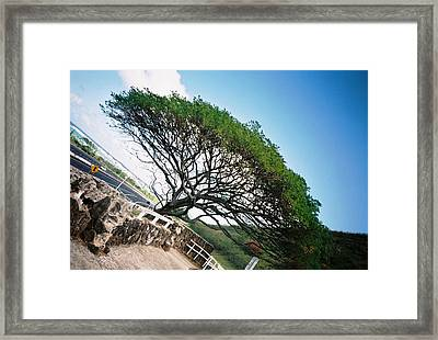Framed Print featuring the photograph Disoriented Tree by Judyann Matthews