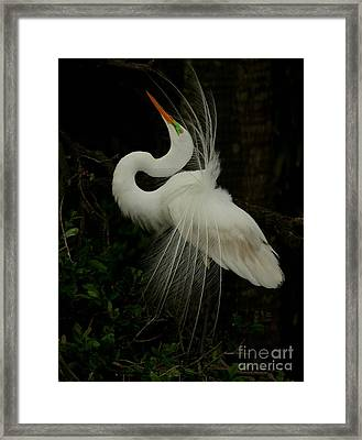 Displaying In The Shadows Framed Print
