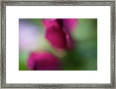 Distant Roses Framed Print