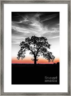 Framed Print featuring the photograph Distinctly by Betty LaRue