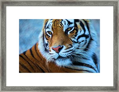 Distracted Framed Print