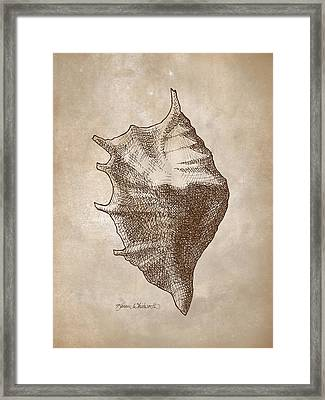 Distressed Antique Nautical Seashell 1  Framed Print by Karen Whitworth