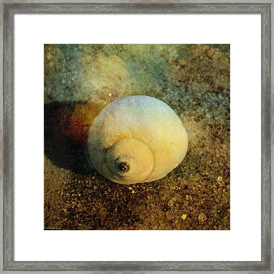 Distressede Moon Snail Framed Print