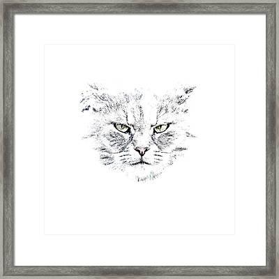 Disturbed Cat Framed Print by Everet Regal