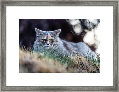 Disturbed Cat - Grace Framed Print by Everet Regal
