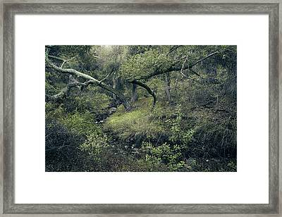 Framed Print featuring the photograph Ditch And Oaks by Alexander Kunz