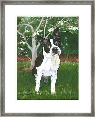 Ditto Framed Print by Eileen Hale