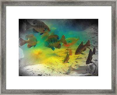 Dive Buddies Framed Print