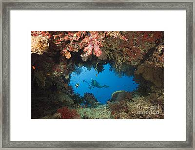 Diver And Coral Cave Framed Print