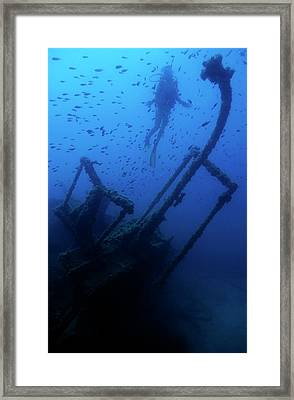Diver Exploring The Dalton Shipwreck With A School Of Fish Swimming Framed Print by Sami Sarkis