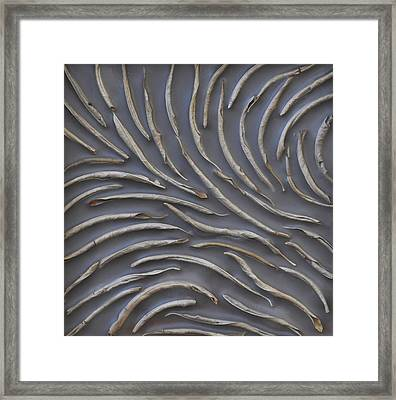 Diverge Framed Print by Susie Frazier