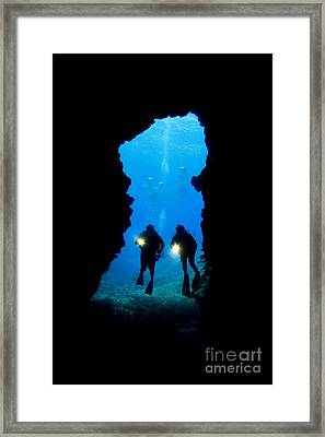 Divers Silhouetted Through Reef Framed Print by Dave Fleetham - Printscapes