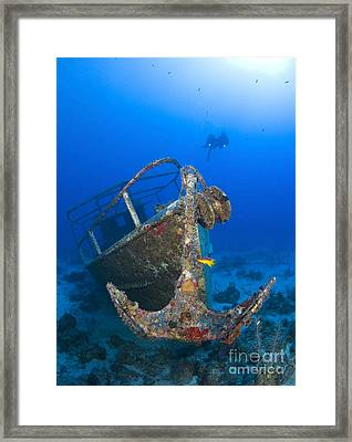 Divers Visit The Pelicano Shipwreck Framed Print by Karen Doody