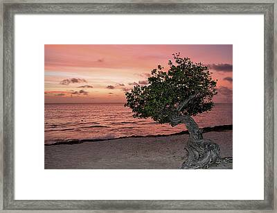 Divi Divi Aruba Framed Print