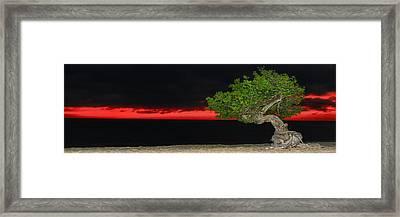Divi Divi Night Framed Print