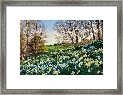 Framed Print featuring the photograph Divine Bovines by Bill Wakeley