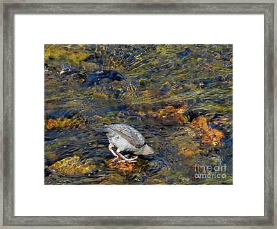Framed Print featuring the photograph Diving For Food by Ausra Huntington nee Paulauskaite