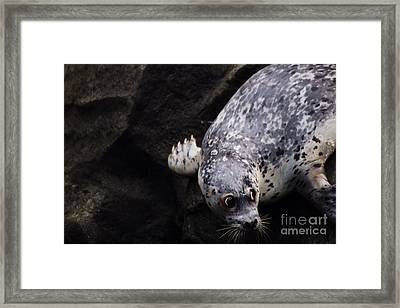 Framed Print featuring the photograph Diving In Head First by Nick Gustafson