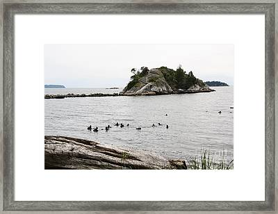 Diving In White Rock  Framed Print