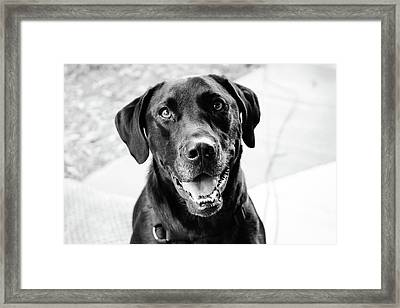 Dixie Framed Print by Erin Houston