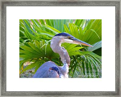 Dixieland Blues Framed Print
