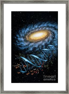 Dna Galaxy Framed Print by Lynette Cook
