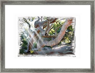 Do-00044 Mount Ettalong Framed Print