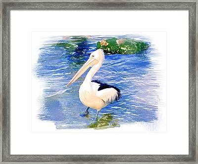 Do-00088 Pelican Framed Print