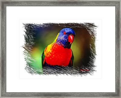 Do-00153 Colourful Lorikeet Framed Print