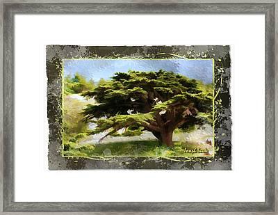 Do-00318 Cedar Barouk - Framed Framed Print
