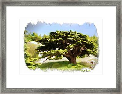 Do-00319 Cedar Tree Framed Print