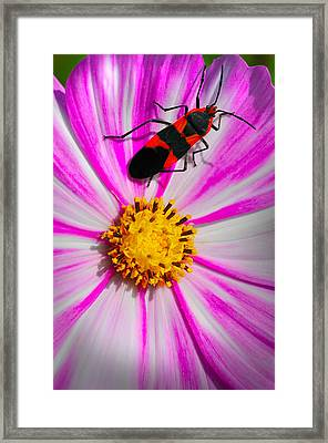 Do I Clash With This Flower? Framed Print