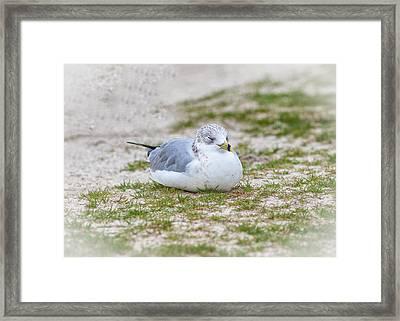 Do Not Disturb The Gull Framed Print by John M Bailey