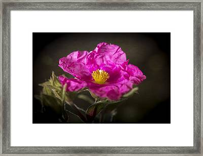 Framed Print featuring the photograph Do Not Iron by Caitlyn Grasso