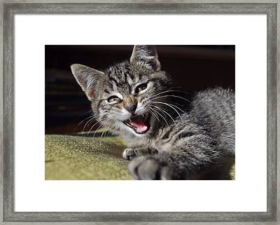 Do Not Start With Me Framed Print by JAMART Photography