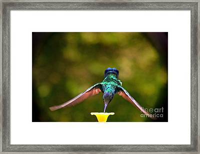 Do Not Watch Me While I Am Eating Framed Print by Al Bourassa