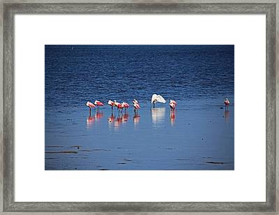 Framed Print featuring the photograph Do What You Wanna Do by Michiale Schneider