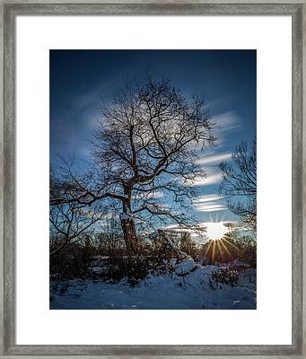 Do You Believe In Ents? Framed Print