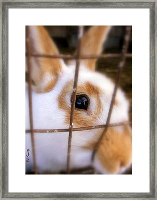 Do You See What Eye See Framed Print by Ed Smith