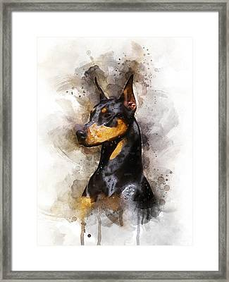 Doberman Framed Print