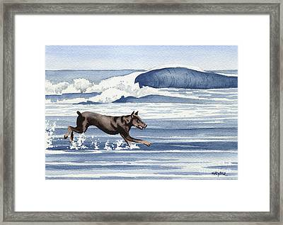 Doberman At The Beach  Framed Print by David Rogers