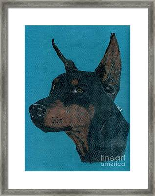 Framed Print featuring the drawing Doberman Pincher by Terri Mills