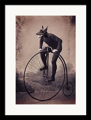 Dobermann Framed Prints